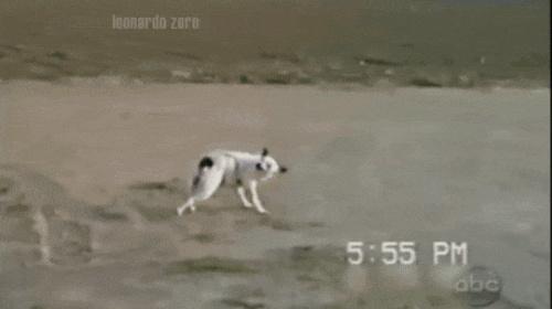 smart doggo
