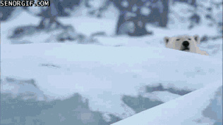 How pics of polar bear are captured