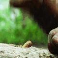 My ancestors watching me struggling to crack a walnut