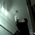 como atrapar una tarantula