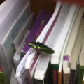 I've heard of bookworms but never book beetles