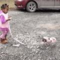 walking the piggy