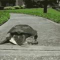 pega ela filho ela é lenta