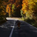 Road Rash To The Extreme!