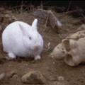 El titulo se lo comió el conejo