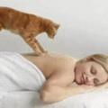 Gatto massaggiatore