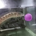fish gets a surprise snack