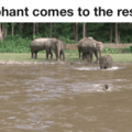 faith in pachyderms restored