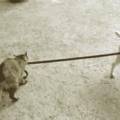 It's a cat walk dog world