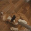 Os Gatos iram dominar o mundo