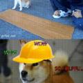 Working doggo