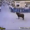 the bull whisperer