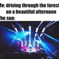 the forest rave