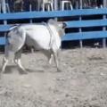 ................. quando o cavalo se vê numa enrascada ao perceber que aquele otacu quer chupar o pinto cavalal e lembra do jogo mortal combate e do golpe raduquem pentaloucamente