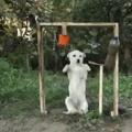 Poor doggu