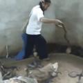 Stanley matador de cobras tenta pegar Jiboia para o jantar