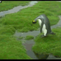 Penguin couldn't jump