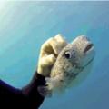quem é o peixinho lindo?