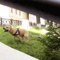 Parkour doggo