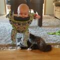 """""""Baby-cat-toy"""""""