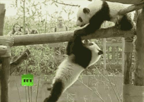Casse-toi c'est mon arbre !