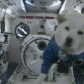 Doggo In Space