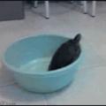 Turtle's great escape