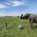 Elephants never forget...or forgive