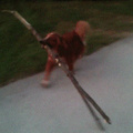 Doggo got hit