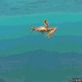 Ever seen a crab swimming?