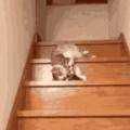 Oof cat