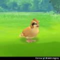 *5 CP pidgey fled*