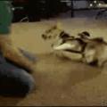 Lé chien !