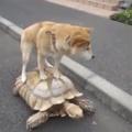 A tartaruga sou eu e o dog os problemas da vida