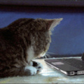 Gato de internet