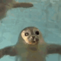 cute seal for youre day