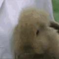cute bunny smiling