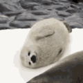 cute seal for your day